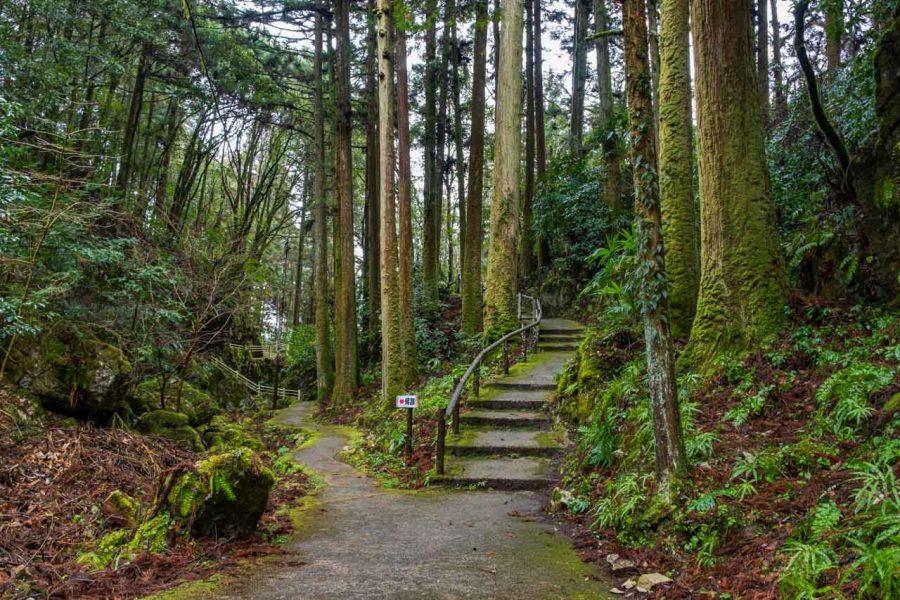 Japanese forest and hiking trails in Akiyoshidai National Park, Japan