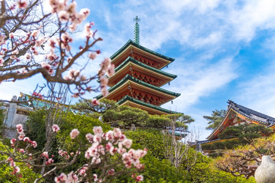plum blossoms and a Japanese pagoda in Hiroshima, Japan