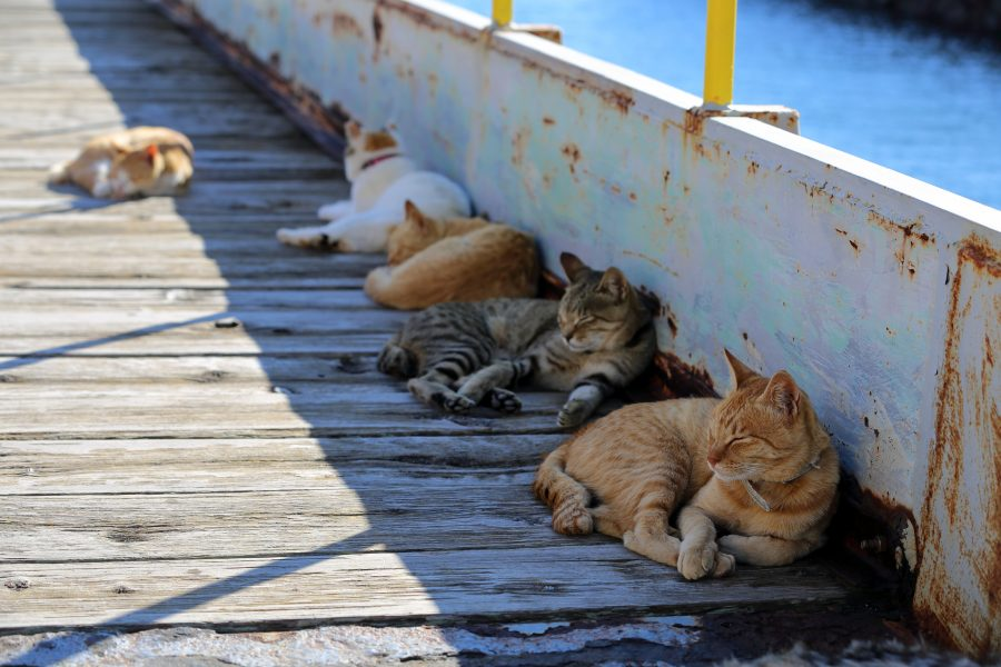Cats resting in the shade on Aoshima pier.