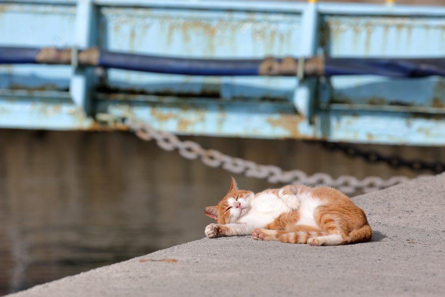 Orange tabby cat relaxing on dock