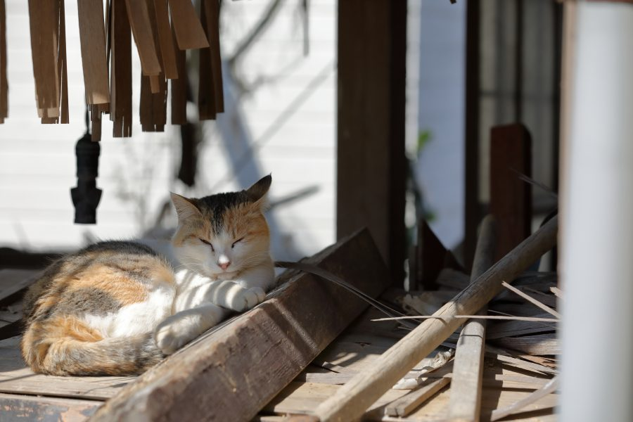A calico cat resting in an abandoned house.