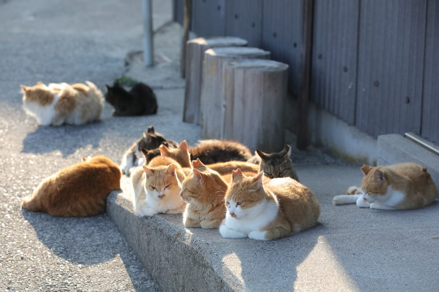 Cats resting side by side on Aoshima