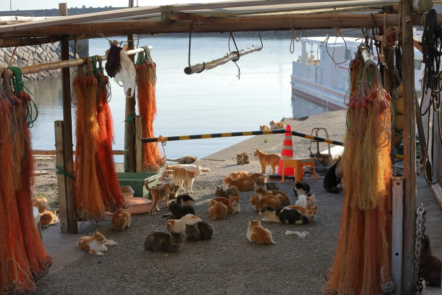 Cats gather on the dock of a cat island in Japan