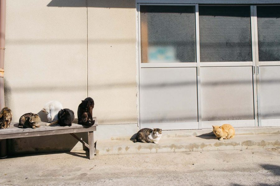 Cats on the port of Manabeshima, a Japanese cat island