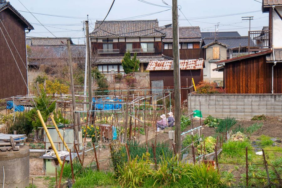 Vegetable gardens in a village on a Japanese island.